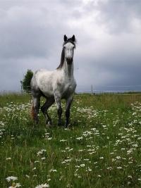 dürfen pferde klee fressen
